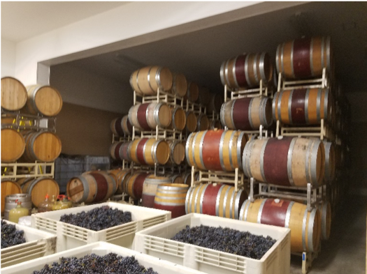 Sunshine in a Glass: Sustainable Vineyard Tour