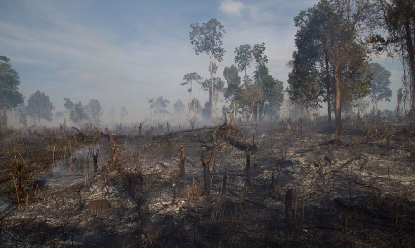 Cambodia's Buddhist Monks Fight Against Deforestation