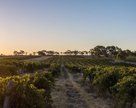 The Grapes of Wrath: Global Warming and Wine
