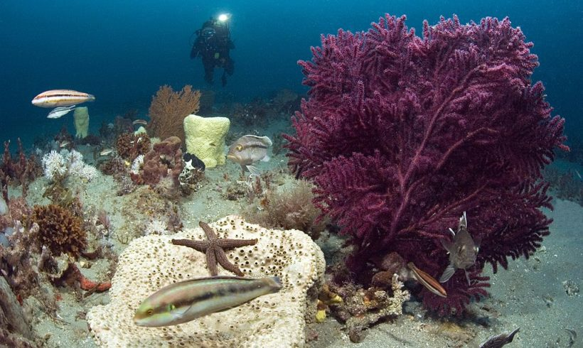 Ocean health is good business: An urgent call to ocean action