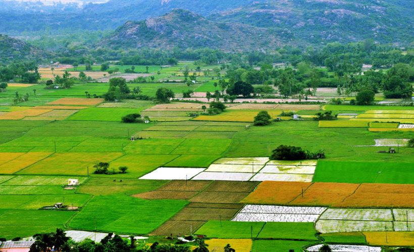 How Consumerism Impacts Modern Farming Methods