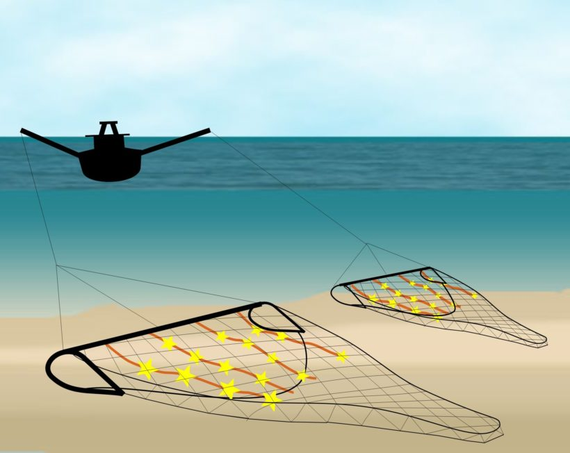 Let Leadership Bloom: French Non-Profit's Environmental Success