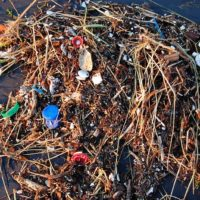 Ocean Microplastics are Multiplying