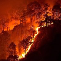 Australia's Wildfires: Climate Change and How We Can Help