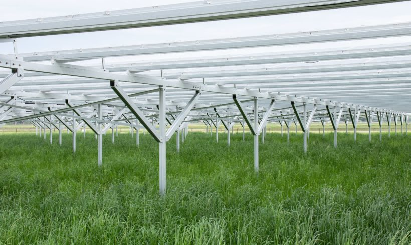 Agrivoltaics: how you can have your kale and eat it too