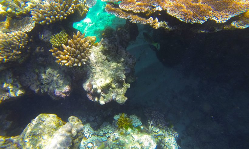 'No Time to Lose': New Study Shows 50% Coral Decline on Great Barrier Reef