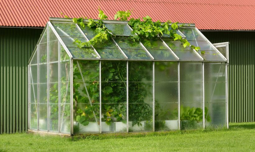 Building a Greenhouse? Research These 5 Things Before Starting